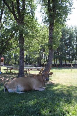 ECO URBIÓN: Nuestra vaca Gar